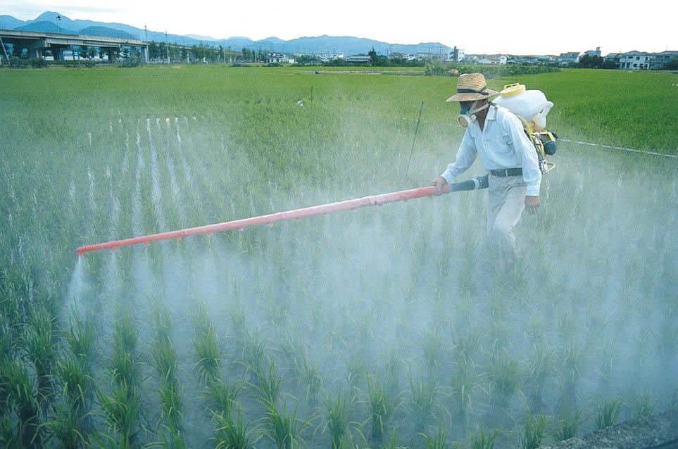 diabetes e pesticida